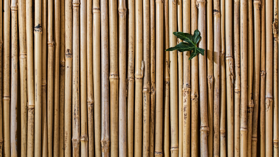 bamboe vloeren inspiratie