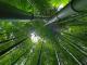 Duurzaamheid van een bamboe vloer